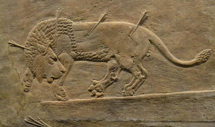 Lion pierced with arrows - Lion Hunts of Ashurbanipal - British Museum